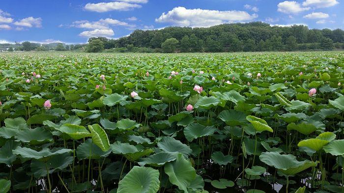 天候と季節の変化 - 菜の花がさくころに現れる春の長雨