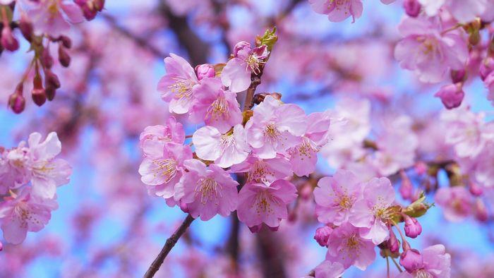 天候と季節の変化 - 桜の時期に一時的な冷え込みがある