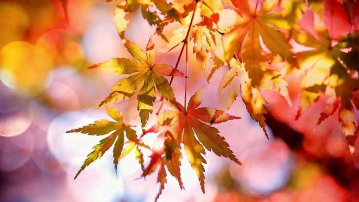 天候と季節の変化 - 秋の深まりとともに天気が安定して晴天が続きます
