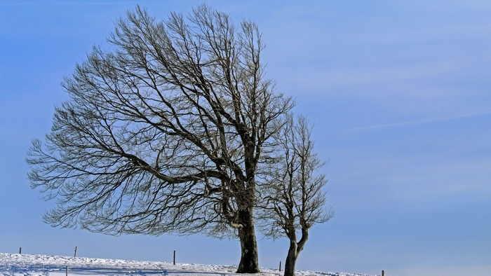 天候と季節の変化 - 木枯らし一号は晩の終わりを告げる冷たい北風です