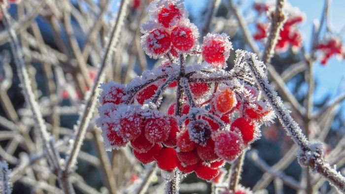 天候と季節の変化 - 初霜や初氷は冬が間近であることを実感する朝の現象です