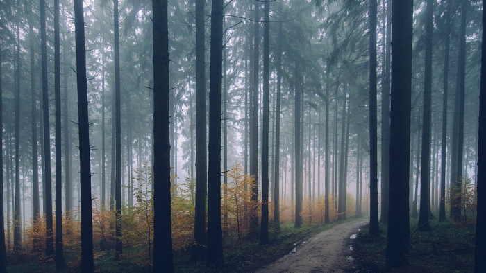 天候と季節の変化 - 秋に多く発生しやすい放射霧は、地面が冷やされてできます