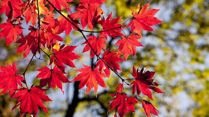 天候と季節の変化 - 植物の変化は春の到来と秋の深まりを実感
